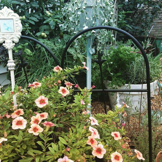 french garden style cottage garden style gardening petunias spring gardening
