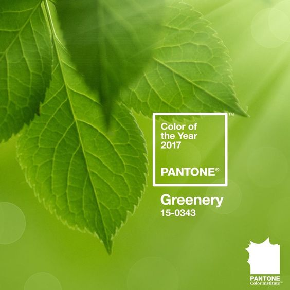 panetone color of the year 2017 Green decorating with Green ideas for green decor