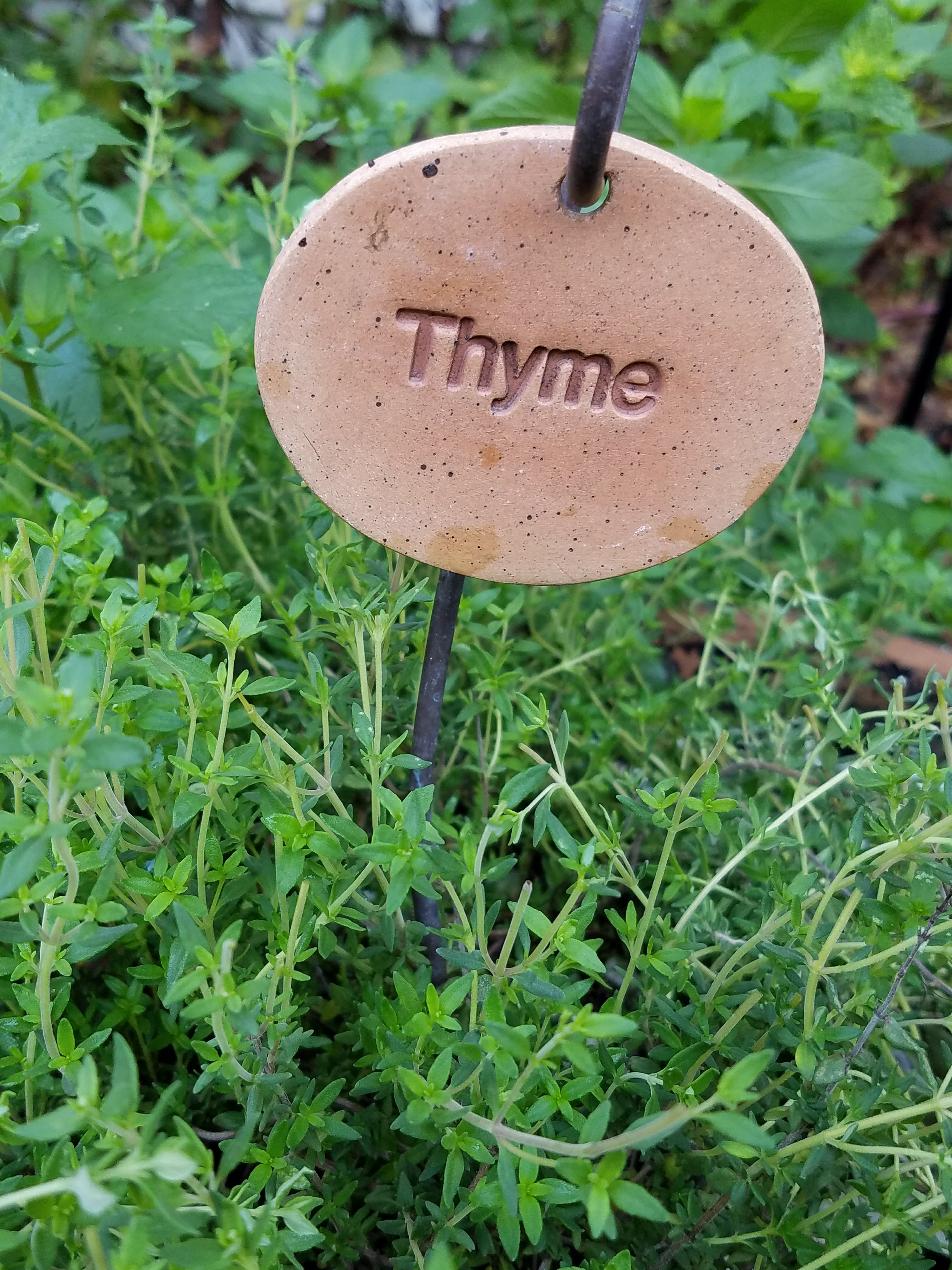 Lemon Thyme with cute herb marker