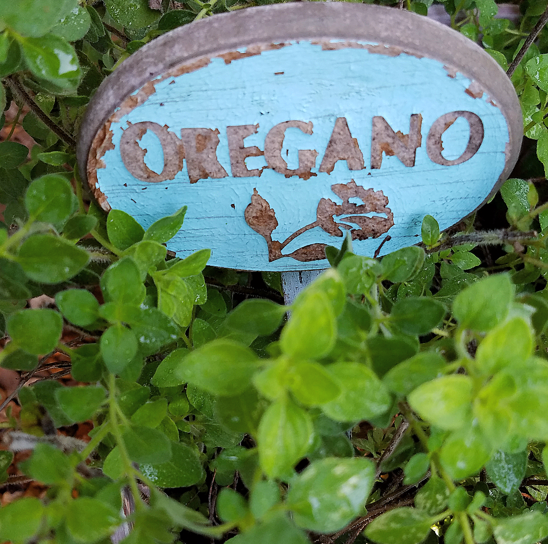 Beautiful oregano herb marker