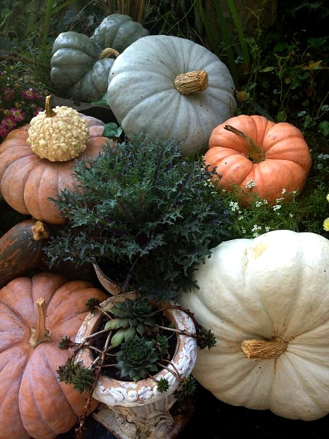 Lovely mix of heirloom pumpkins and autumn kale
