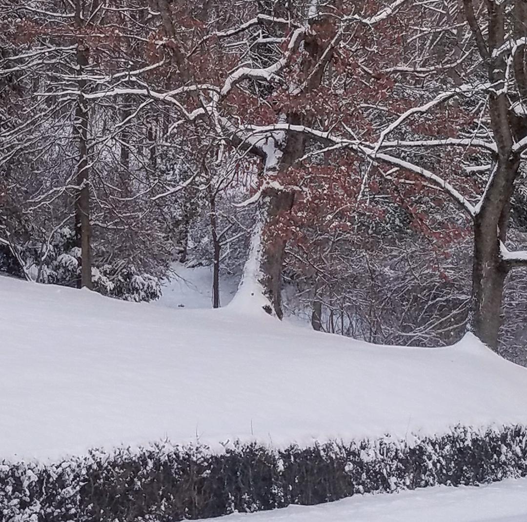 Beautiful winter snow in Kentucky