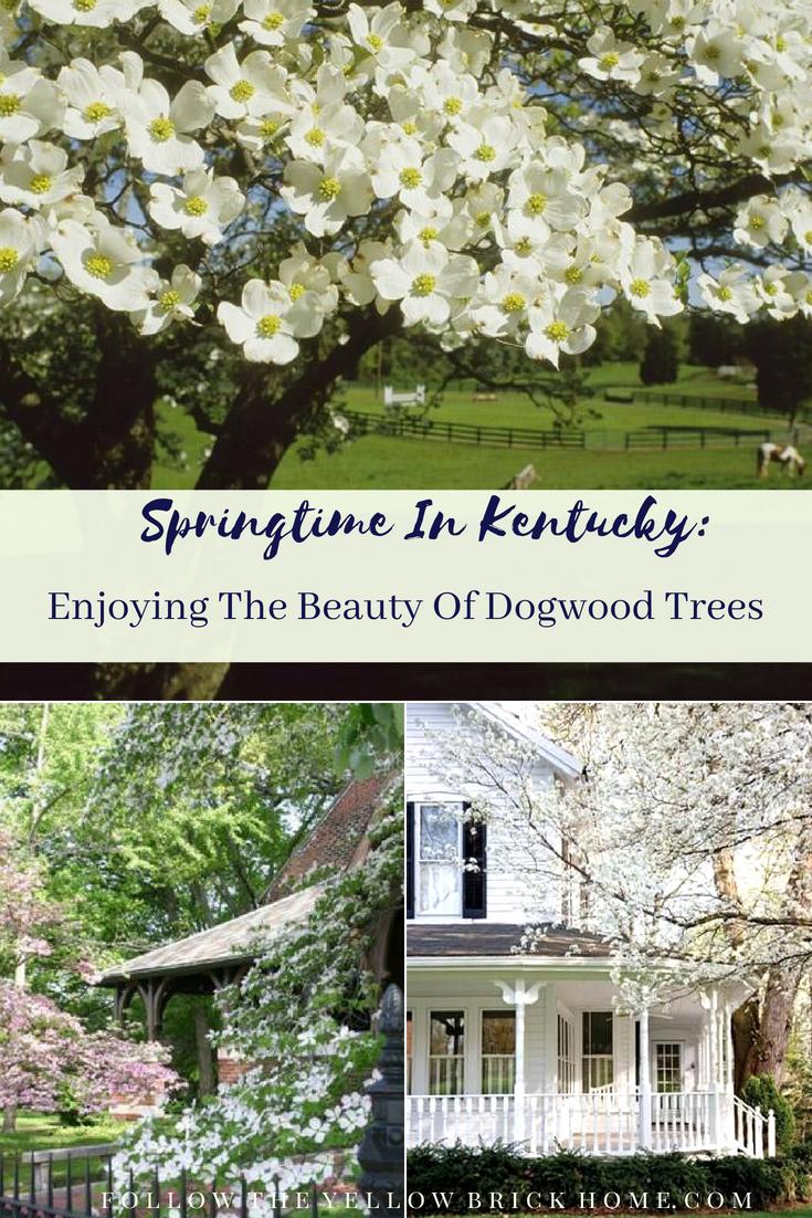 Dogwood Trees Kentucky Spring