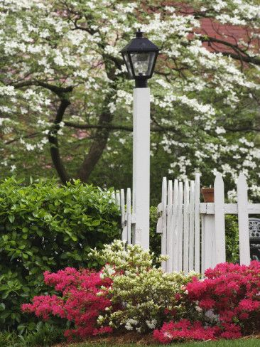 Beautiful Spring flowering trees and shrubs Dogwood trees azaleas in bloom