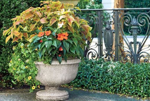 summer container garden ideas late summer flowers late summer containers