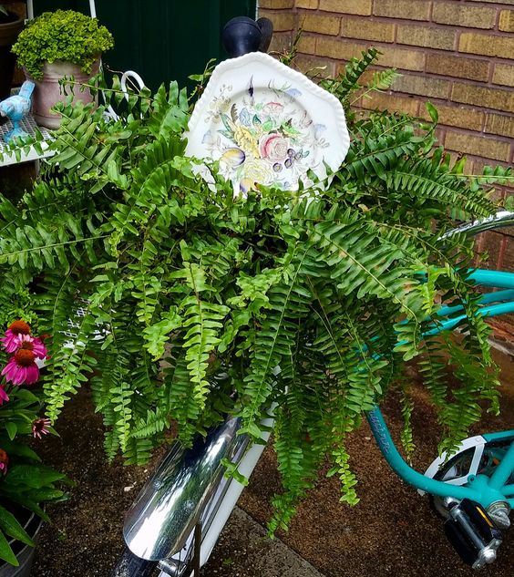 vintage dish as a garden accent using dishes in the garden vintage bicycle with fern in basket and vintage plate