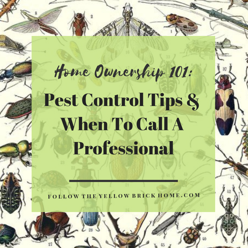 Pest prevention and pest control tips. When you should call a professional exterminator