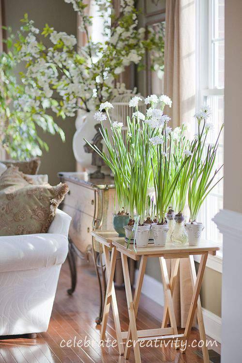 How To Grow Paperwhites Paperwhite garden