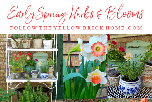 Early spring herbs, spring flowers, spring blooms, daffodils, tulips, azaleas