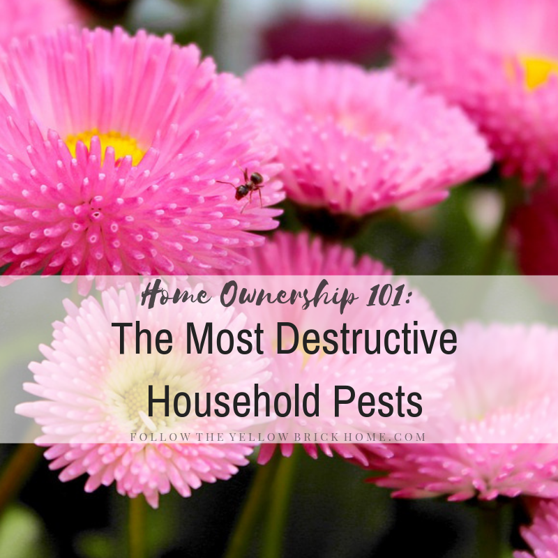Pest control non-toxic organic pest control options