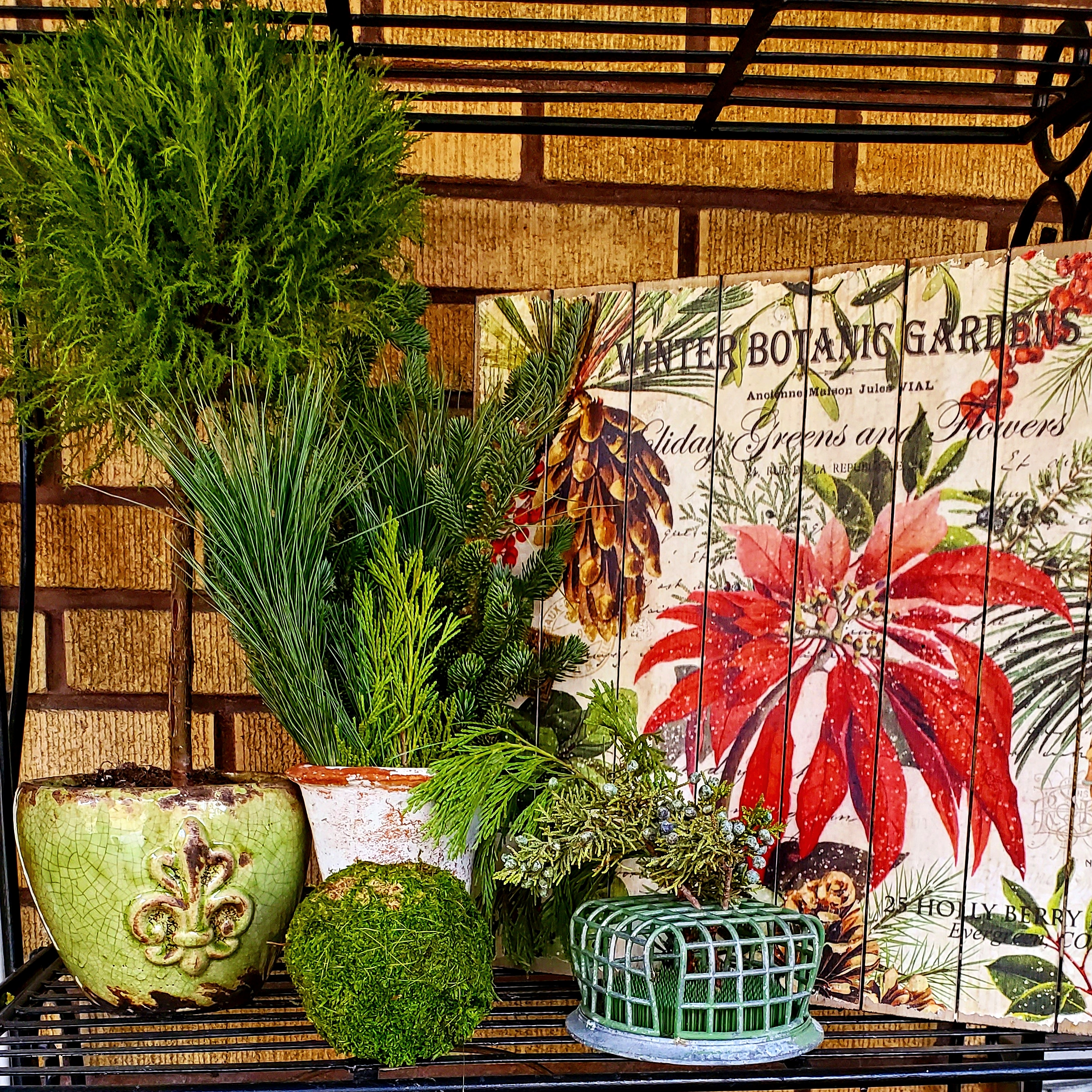 winter garden style winter garden ideas potted winter plants lemon cypress topiary
