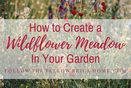 How to Create a Wildflower Meadow to Your Garden