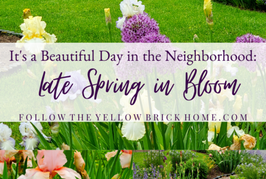 Late spring flowers irises salvia beautiful flowers in spring
