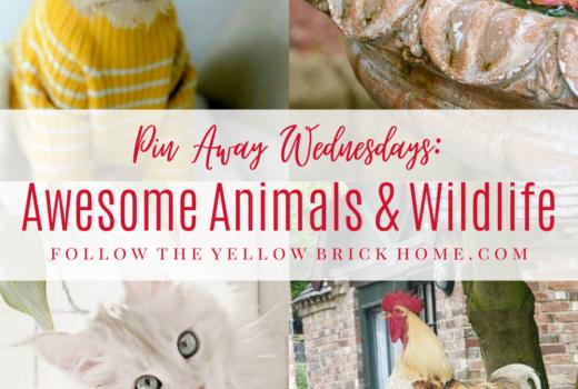Adorable animal photos, rare animals and wildlife, gorgeous animal images
