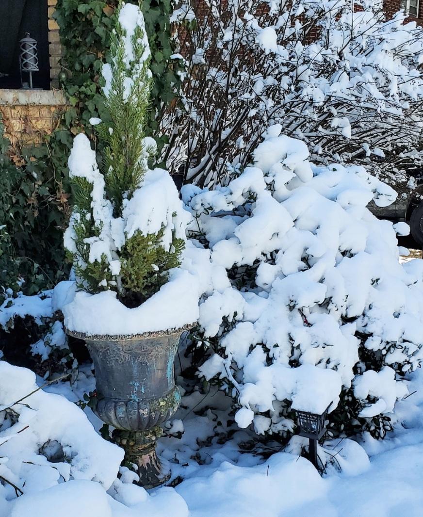 Winter Garden snowy landscape snowy urns