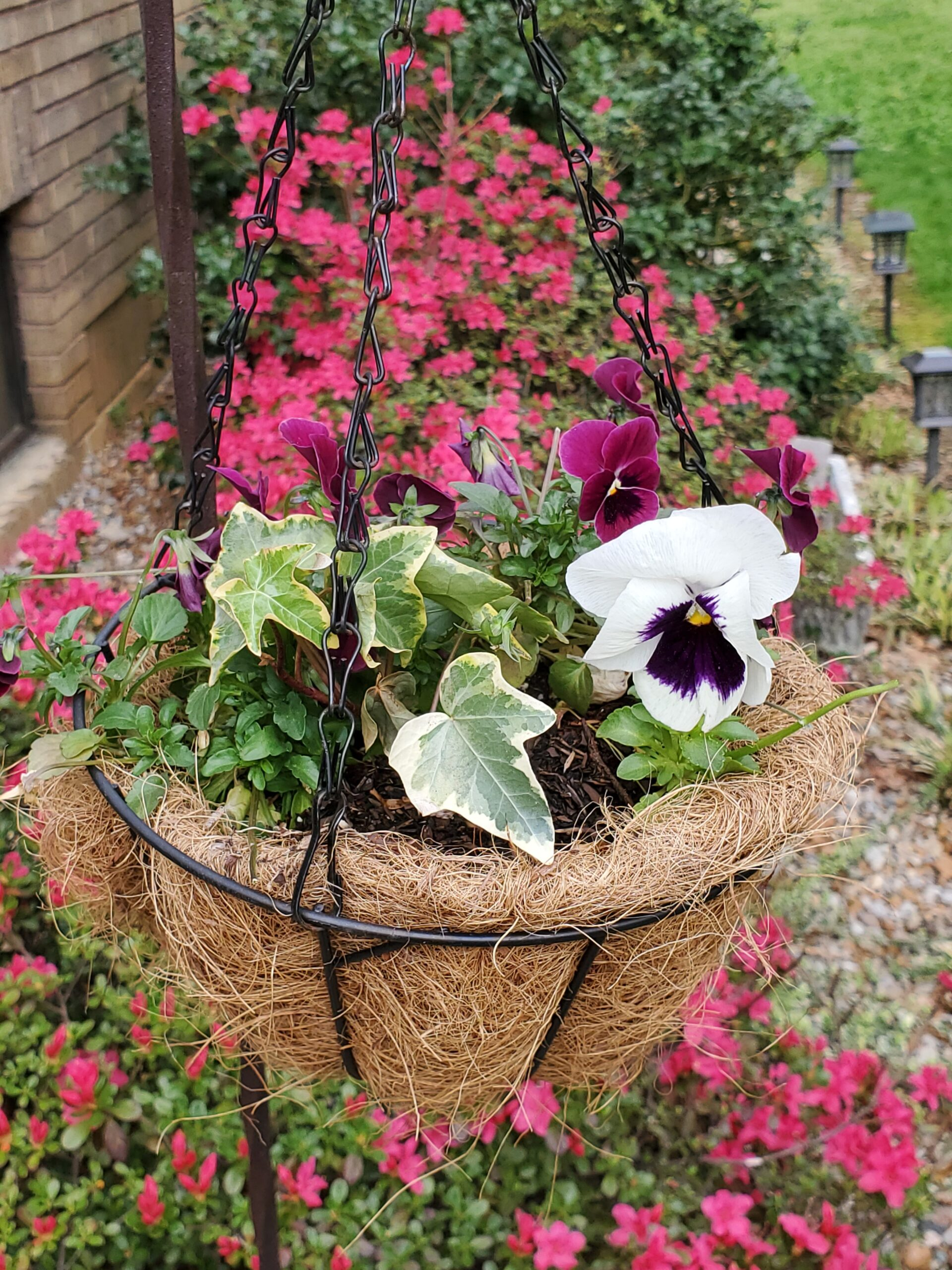 small hanging basket with pansies and ivy